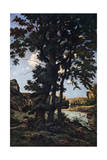 Oak Trees in Chateaunenard  France  1926