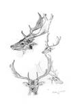 Stags' Heads  1898