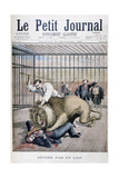 Lion Attack  1895