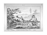 Cockney-Sportsmen Finding a Hare  1800