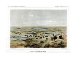Herd of Bison Near Lake Jessie  North Dakota  USA  1856