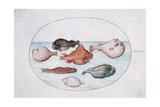 Fish  16th Century