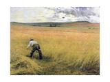 The Ripened Wheat  1880
