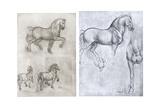 Horses  C1490-1510