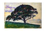 Large Pine  Saint-Tropez  1892-1893