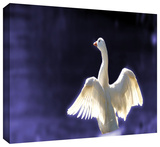 goosewings Gallery-Wrapped Canvas