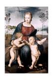 Madonna Del Cardellino  1507