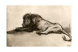 Study of a Lion  1913