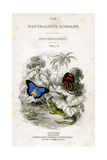 The Naturalist's Library  Entomology  Vol V  Butterflies  C1833-1865