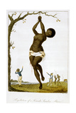 Flagellation of a Female Samboe Slave  1793