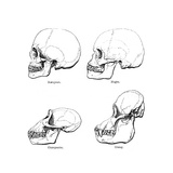 Lateral View of the Skull or Profile  1848