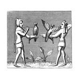 Falconers Dressing their Birds  14th Century