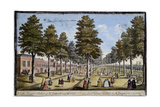 St James Palace and Park  London  Showing Formal Planting of Trees in Avenues  1750