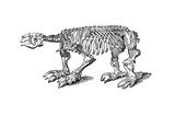 Skeleton of Megatherium  Extinct Giant Ground Sloth  1833