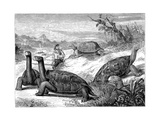 Giant Land Tortoises of the Galapagos Islands  1884