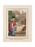 New Potatoes  Cries of London  1804