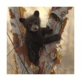 Curious Cub I Reproduction d'art par Collin Bogle