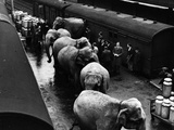 Elephant Train Ride