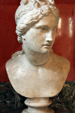 Bust of Aphrodite  Goddess of Beauty and Love