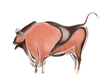 Cave Painting of a Bison from the Altamira Cave  Spain  1933-1934