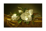 Magnolias on Gold Velvet Cloth  C 1889