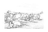 Native Americans Hunting Buffalo  1841