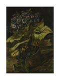 Cineraria  1886