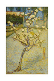 Small Pear Tree in Blossom, 1888 Giclée par Vincent Van Gogh