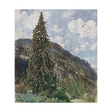 The Old Spruce in Bad Gastein  1899