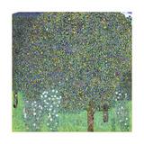 Rose Bushes under the Trees, C. 1905 Giclée par Gustav Klimt