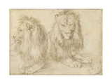 Two Seated Lions  1521