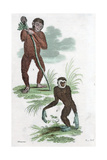 Orang Utang and Gibbon  1822