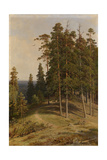 The Pine Forest  1895
