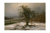 Oak Tree by the Elbe in Winter