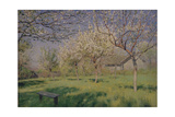 Apple Trees Blooming  C 1895