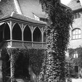 Lime Tree in a Courtyard  Nuremberg  Bavaria  Germany  C1900s