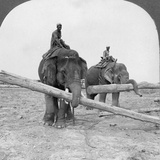 Elephants Working in a Lumber Yard  Rangoon  Burma  1908