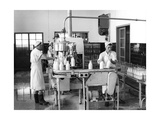 Milk Production  Zagreb  Yugoslavia  1952