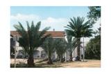 Palm Trees  Hammam Meskoutine  Algeria