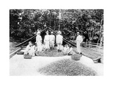 Drying Cocoa  Trinidad  C1900s