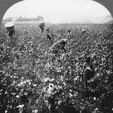 A Cotton Plantation  Rome  Georgia  USA  1898
