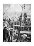 The Shipping of Mules  Syros Island  Greece  1937