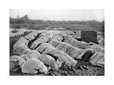 Muslims at Prayer  Algeria  1920