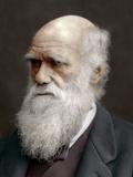 Charles Darwin  British Naturalist  1878
