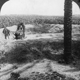 Threshing in Egypt  1905