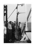 Shark on Board the Cruise Ship 'Atlantis  Caught Off Bathurst  Gambia  20th Century