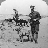 First Aid Dogs  World War I  C1914-C1918