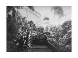 Interior of the White House Greenhouse  Washington Dc  USA  1908