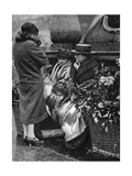 Flower Sellers  Piccadilly Circus  London  1926-1927