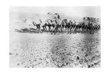 Camel Train  Mosul  Mesopotamia  1918